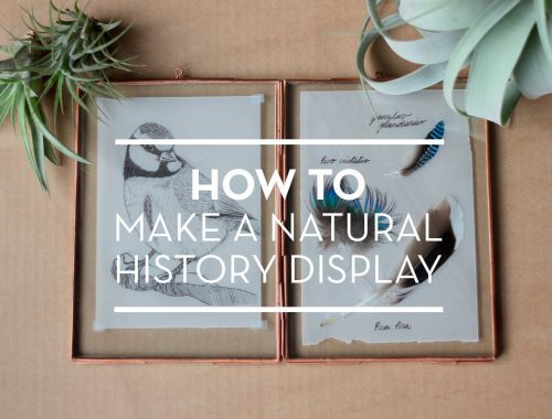a diy natural history display